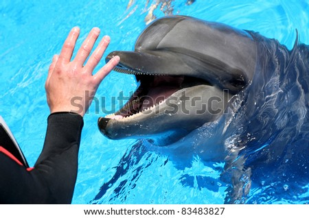 Man hand petting a dolphin - stock photo