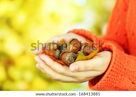 Man hands with acorns, on bright background - stock photo