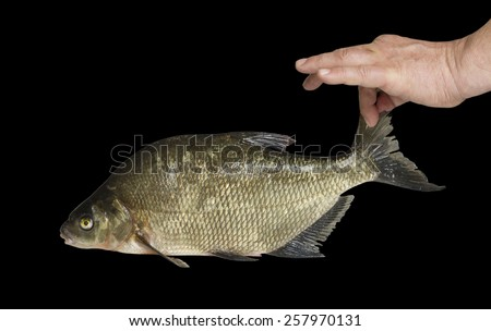 Man holding a fish tail. - stock photo