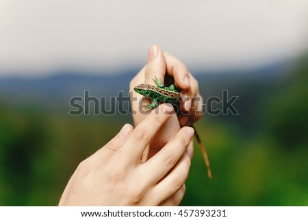 man holding green lizard in his hand in summer mountains,  travel  concept, space for text, discover and explore wildlife - stock photo