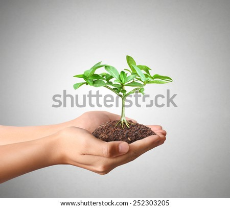 Man holding green plant in hand