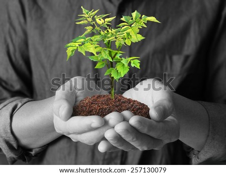 Man holding green plant in hand - stock photo