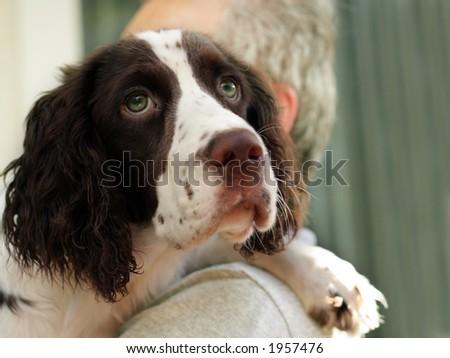 Man holding his spaniel dog - stock photo