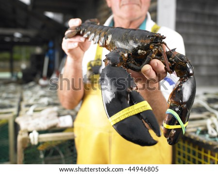 Man holding lobster with bound claws. Horizontal shot. - stock photo