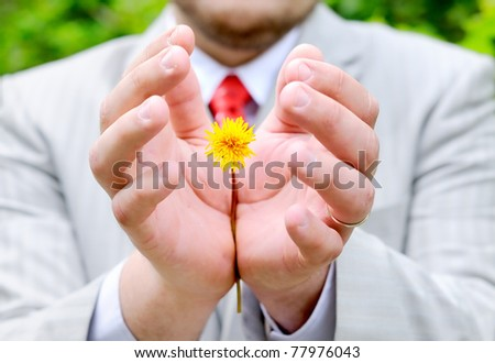 Man holding or protecting yellow flower (dandelion) - stock photo