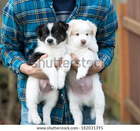 Man Holding Two Small Puppies Outside - stock photo