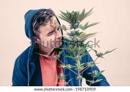 Man in hoodie smelling Cannabis plan in flowering phase. - stock photo