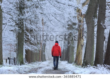 Man in red jacket walking alone in a lane of trees with hoarfrost on a cold winter morning. - stock photo