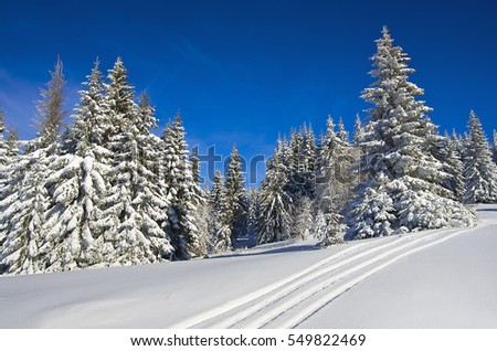 man in winter forest on a sunny day, ?ountain ski resort Kopaonik, Serbia