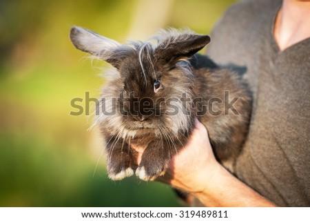 Man keeping beautiful fluffy black angora rabbit in his arms - stock photo