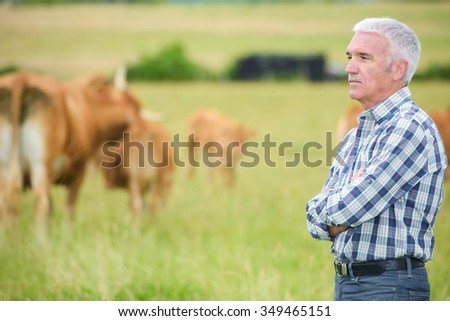 man looking at the cattles - stock photo
