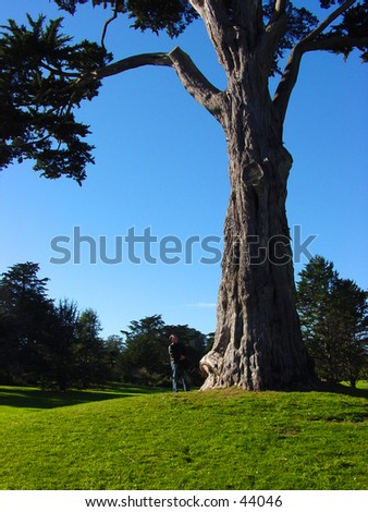 Man looking at the top of a tree - stock photo
