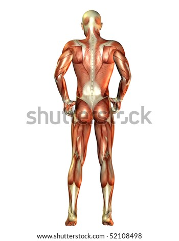 Man muscles back view - stock photo