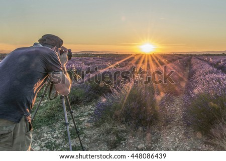 Man photographing a field of lavender in Provence at sunset - stock photo