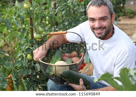 Man picking tomatoes - stock photo
