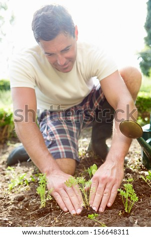 Man Planting Seedling In Ground On Allotment - stock photo