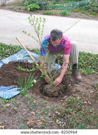 Man planting tree - stock photo