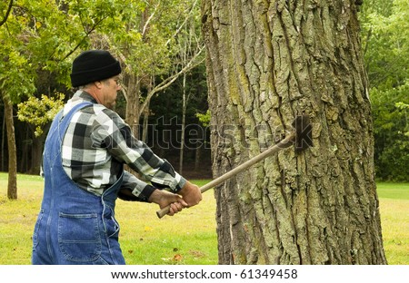 man preparing to chop down a tree with an old double blade axe - stock photo