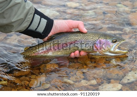 Man releasing rainbow trout fish fly fishing - stock photo