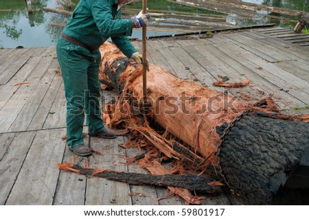 man removing bark