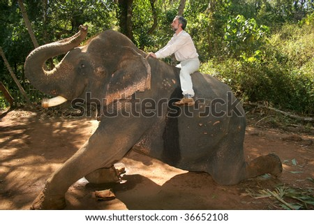 man ride in jungles on an elephant - stock photo