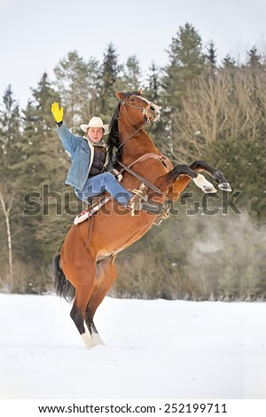 Man riding a rearing bay horse. - stock photo