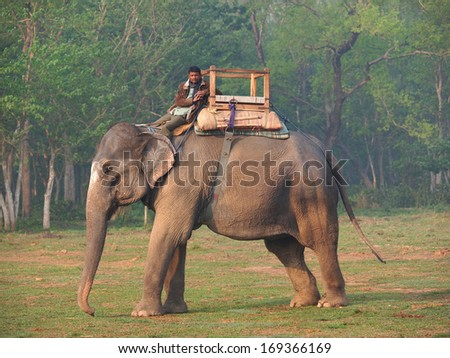 man riding elephant in nature park Chitwan ,Nepal        - stock photo