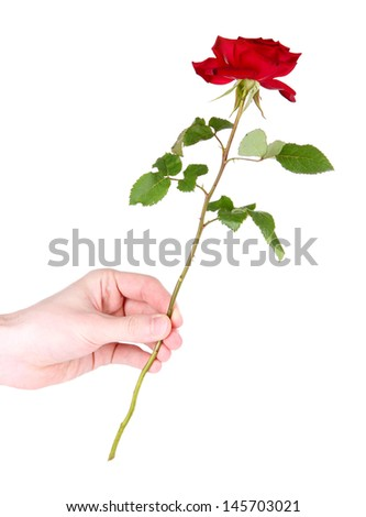 Man's hand giving a rose isolated on white