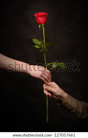 man's hand giving a rose to a woman - stock photo