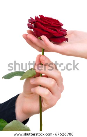 man's hand giving a rose to a woman who carefuly takes it