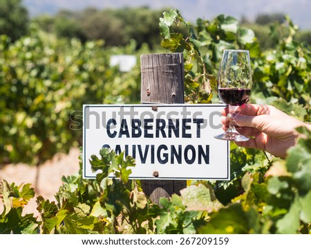 """Man's hand holding a glass of red wine next to a plate reading """"cabernet sauvignon"""" in one of the vineyards in Winelands in Western Cape, close to Franschhoek, South Africa. Horizontal orientation. - stock photo"""