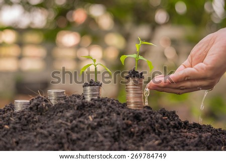 man's hand watering a young plant - stock photo
