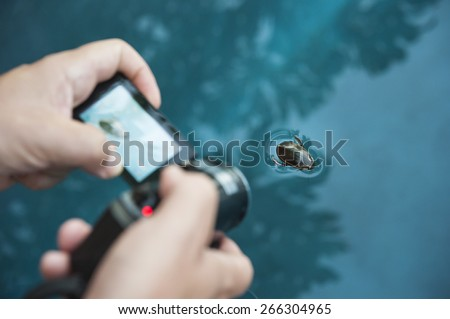 Man's hands holding a video camera filming a swimming water beetle - stock photo