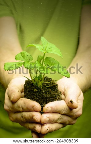 Man's hands holding strawberry seedling in dirt, water drops - stock photo