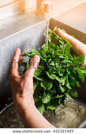 Man's hands washing mint. Water flowing onto mint leaves. Fresh homegrown greenery. Mother nature feeds us well.