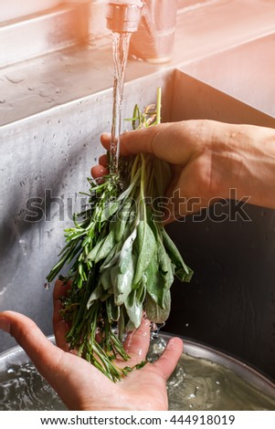 Man's hands washing sage. Water flows on green herb. Fresh rosemary and sage. Seasonings for meat. - stock photo