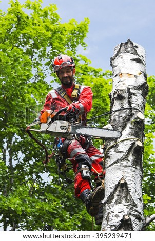 Man saws birch chainsaw at height - stock photo