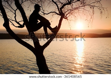 Man sit on tree. Silhouette of  lone boy with baseball cap  on branch of birch tree  in front of the sunset at shoreline. - stock photo