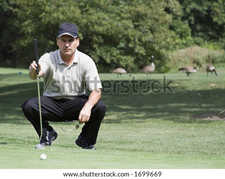 Man sizing up his next golf shot. Geese roaming in the background. - stock photo