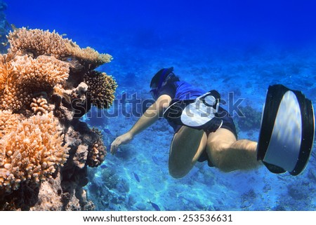Man snorkeling in the Red Sea, Egypt - stock photo