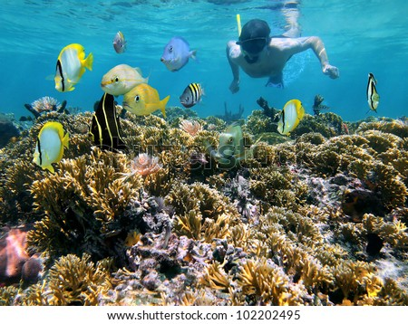 Man snorkeling underwater on a shallow coral reef with tropical fish front of him, Caribbean sea