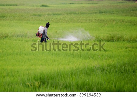 Man spraying pesticide in the green rice fields. - stock photo