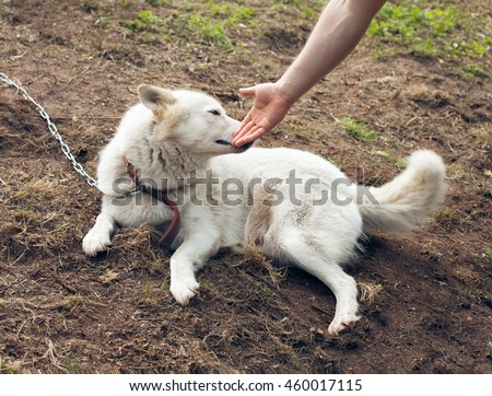 Man stretches out his hand to the dog