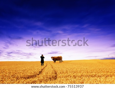 Man taking picture of cow - stock photo