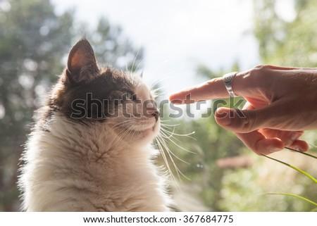 Man touching domestic cat - stock photo