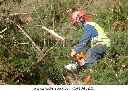 Man trimming branches off Pinus radiata logs, Westland, New Zealand - stock photo