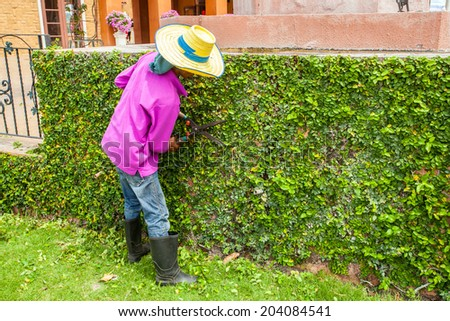 man trimming hedge with trimmer scissors - stock photo