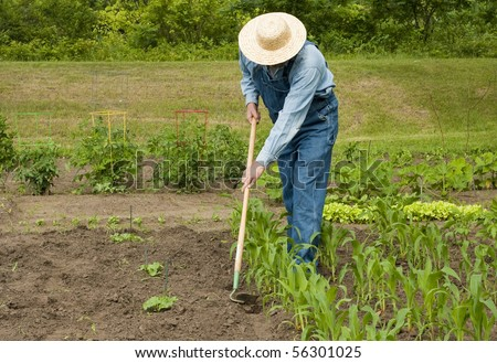 man using a hoe to weed his large garden - stock photo