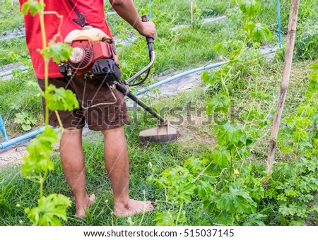 Man using lawn mower cutting grass in bitter gourd garden