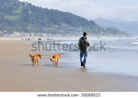 Man walking on beach with dogs - stock photo